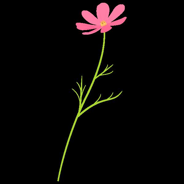 koduchi